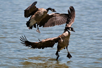 Photo: Ungainly landing