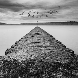 Out there by Danny Charge - Landscapes Beaches ( belfast )