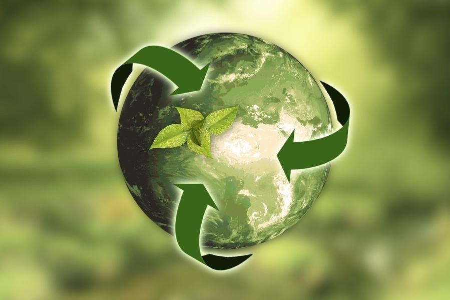 Afbeelding met groen, dauwdruppel, groente  Automatisch gegenereerde beschrijving