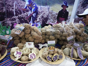 Photo: Native potatoes, one of our treasures to discover