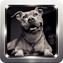 Pitbull Dog Wallpapers icon