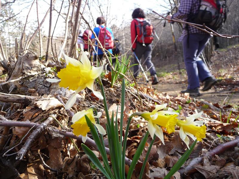 Speranza per la prossima primavera di Laucol