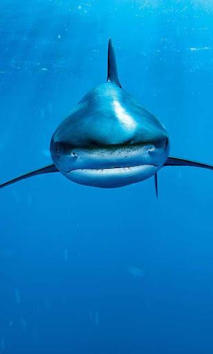 Blue Shark live wallpaper
