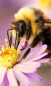Bee Cute Wallpapers screenshot 2