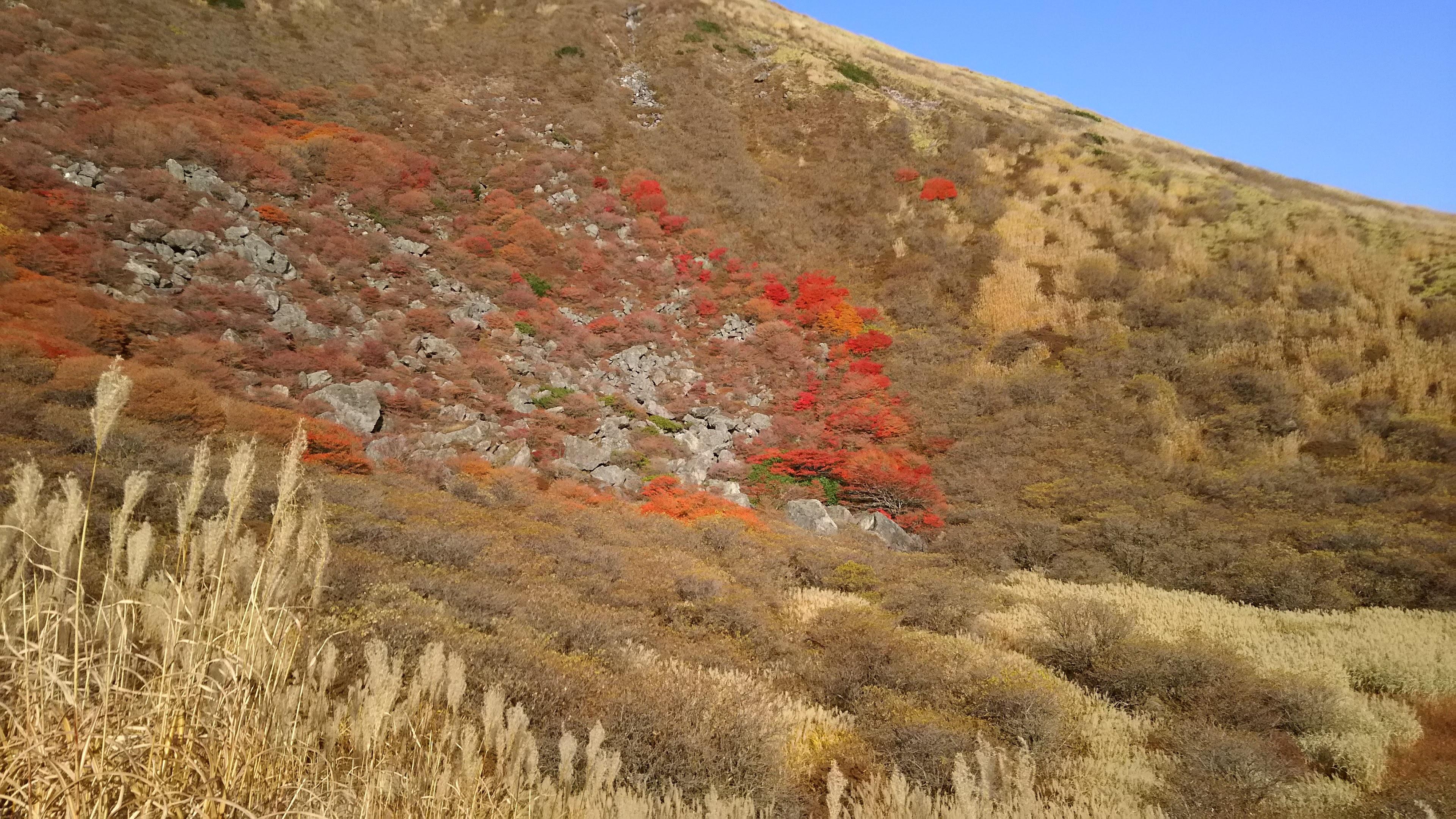 旧火口跡に残る紅葉