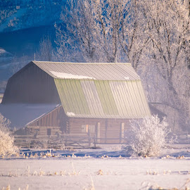 Old Foggy Barn by Chad Roberts - Buildings & Architecture Decaying & Abandoned ( barn, frost, snow, winter, cold, fog )