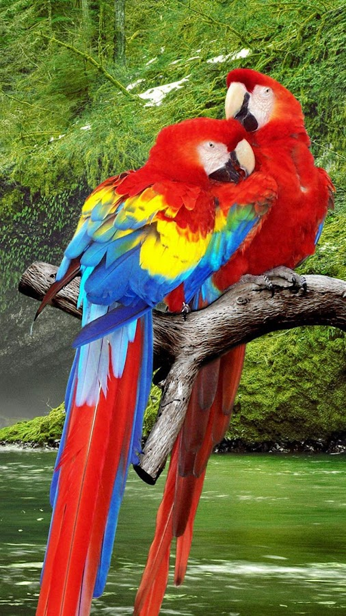 Parrot Live Wallpaper- screenshot