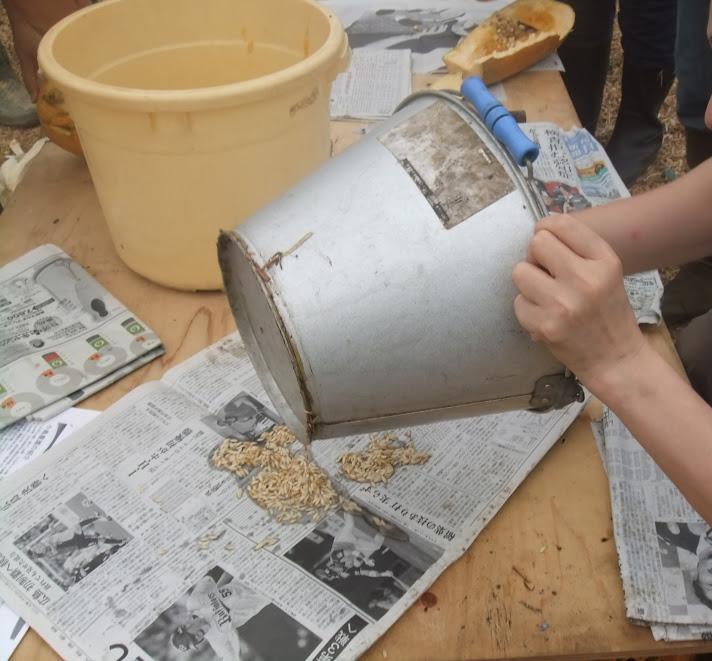 種は新聞に広げて干します。涼しいところで1週間くらい。