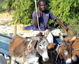 Photo: Donkey cart