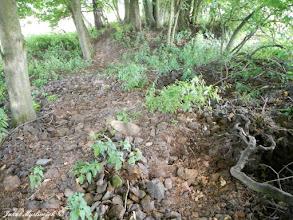 Photo: Aktuální stav lomu - někdo zde podkopává stromy (15.8. 2016).