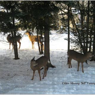 Deer Guard.