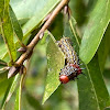 Red-humped caterpillar