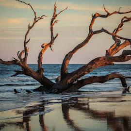 Last Kiss of Sun by Pam Wendel - Landscapes Sunsets & Sunrises (  )
