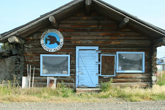Photo: Yukon River.. Beaver