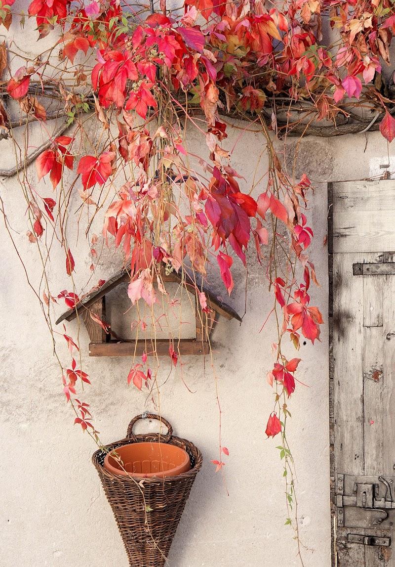 foglie rosse di fantasma49