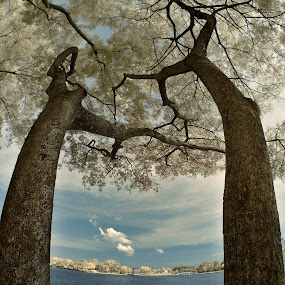 Kissing Trees by Alit  Apriyana - Nature Up Close Flowers - 2011-2013