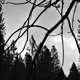 Beautiful Gloom by Sarah Farber - Black & White Landscapes (  )