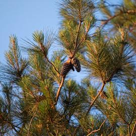 by Cynthia Lynn - Nature Up Close Trees & Bushes