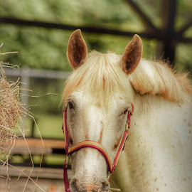 Strike A Pose by Lisa Newberry - Animals Horses (  )