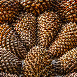Cones by Andrew Lancaster - Nature Up Close Other Natural Objects ( beautiful, macro, twins, pine, natural, nature, cones, patterns, pattern, wood, stunning, trees )