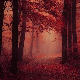 20171021-DSC_2646 by Zsolt Zsigmond - City,  Street & Park  City Parks ( red, park, fog, autumn, fall, trees, forest, light, woods, mist )