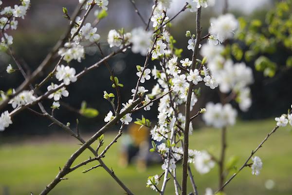 Primavera quanto sei bella di Alessandro Bonesso