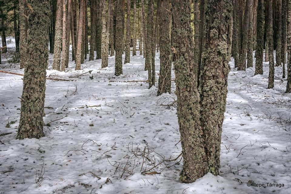 La imagen puede contener: árbol, nieve, planta, exterior y naturaleza