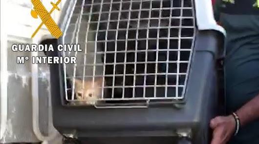 Investigan por maltrato animal a los jóvenes que hacían fumar a dos gatitos
