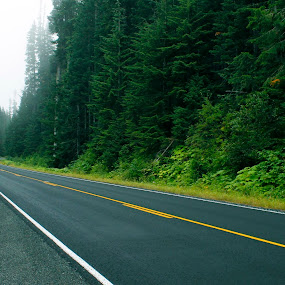 White Pass by Shawn Vanlith - Landscapes Forests ( road trees, white pass )