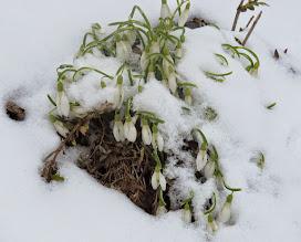 Photo: Spuren des erneuten Wintereinbruchs (Erika)