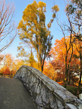 Photo: Lit up autumn trees by a stone bridge at sunset at Eastwood Park in Dayton, Ohio.