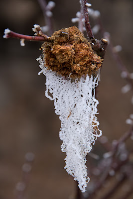 Barba ghiaccio di terracotta