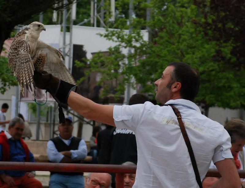 Atterraggio del Falco di Marco Baldoni