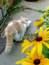 """Photo: Cat stretch.... """"......... yeah..... I'm so not interested in your silly butterflies... you won't let me chase them... and they look like they taste awful.... hummmph!"""" ------------------------------------------------------------------------------------------------------ This is the cattitude I get from my big brave hunter about my Monarch butterflies... :D A big fuzzy behind!  One more for my +CATURDAY!friends +Jules Falk Hunter+Shantha Marie Fountainand +Khrystiane Friedli( +Lee Daniels& +Christophe Friedliwhen they have time...:) No butterflies were harmed in this production! +On the Wings of Butterflies!for +Sharon Jeannettea not so petite chat...."""
