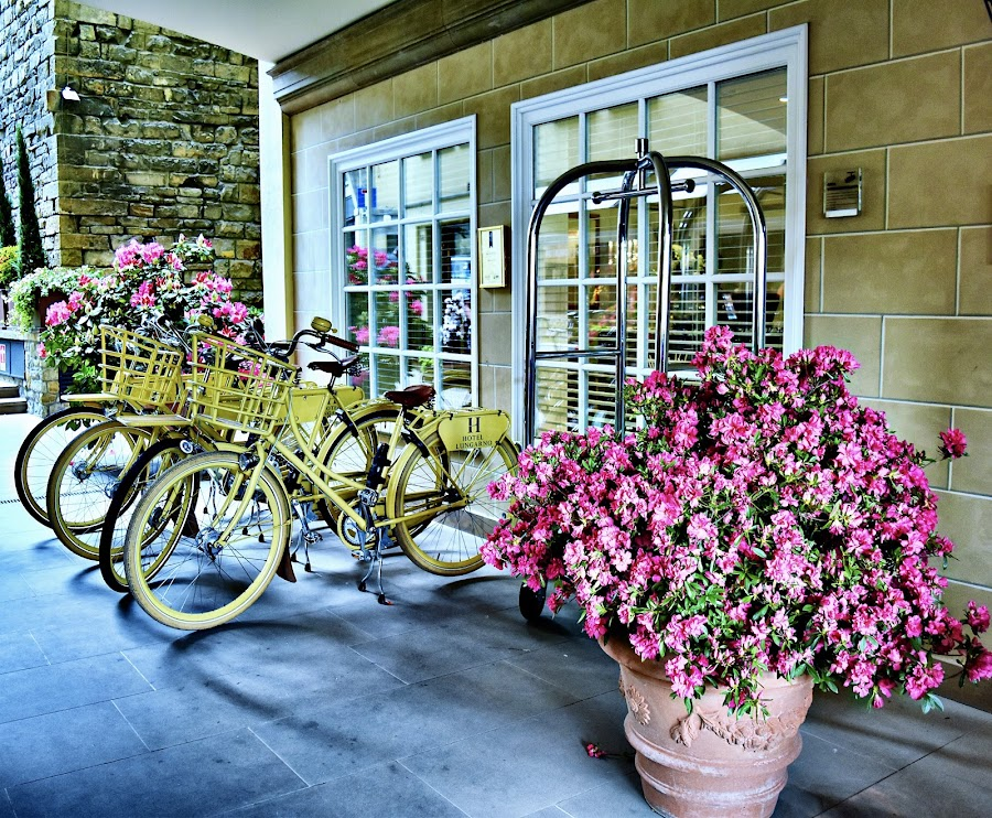 Flowers and bicycles by Nelida Dot - City,  Street & Park  Street Scenes ( flowers, light, artistic, bicycles, colors )