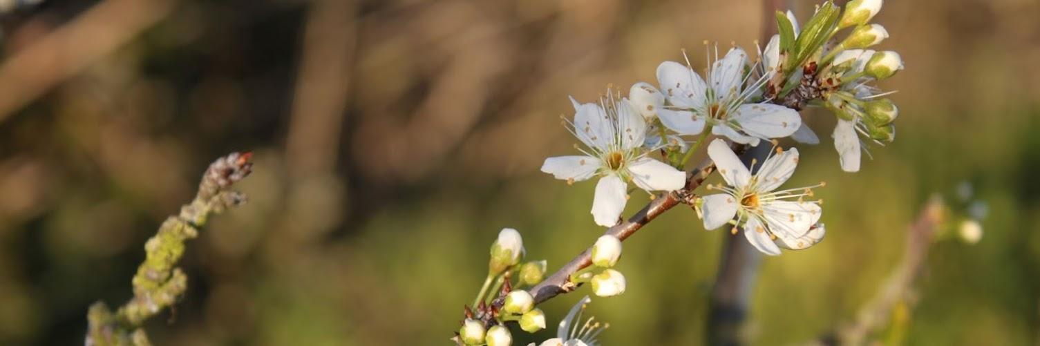 Quinta Pedagógica da Caria e Movimento Pró-Informação para a Cidadania e Ambiente dinamizam Reflorestação Ribeirinha – 24 de Fevereiro 2019