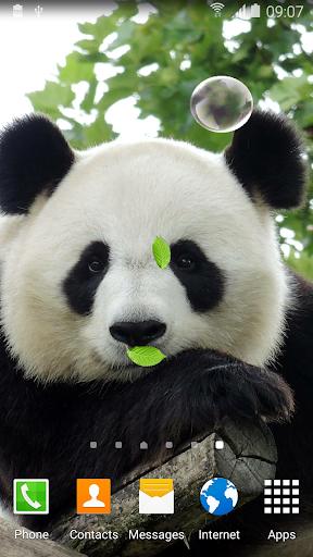 mod Cute Panda Live Wallpaper 1.0.5 screenshots 2