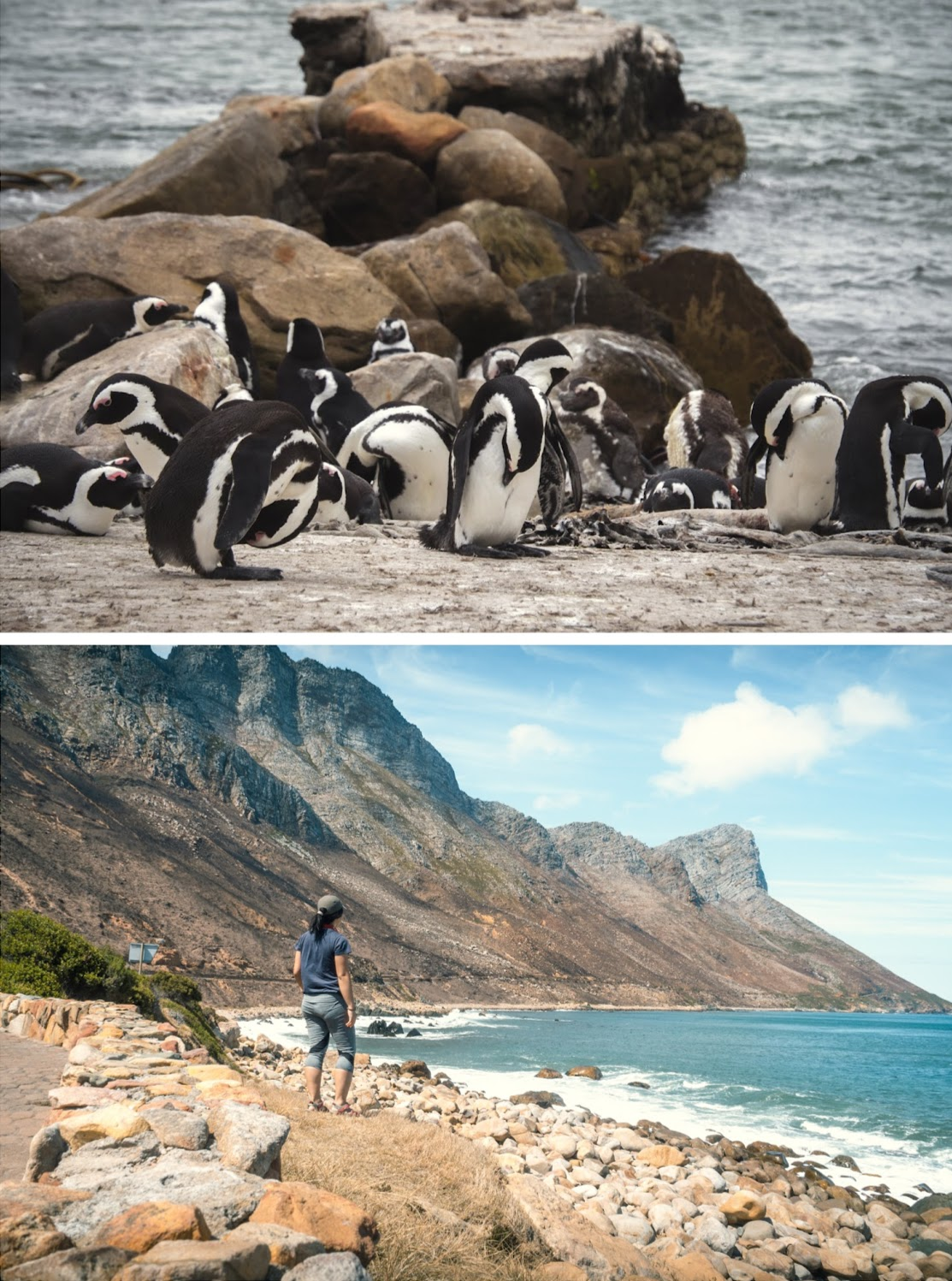 Top: Penguins from Stony Point Reserve. Bottom: Cape Town to Swellendam road.