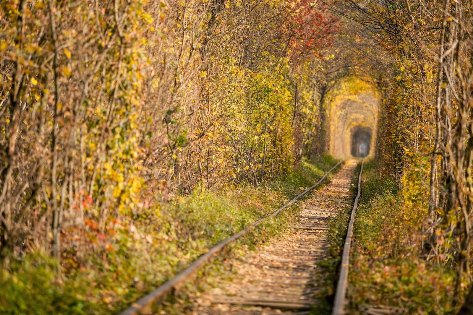 """Ghé thăm """"đường hầm tình yêu"""" đẹp ma mị ở Ukraine, nơi những cặp đôi một lần lạc bước sẽ chẳng muốn quay về - Ảnh 9."""
