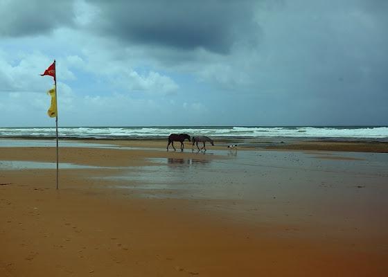 Cavalli e cane di Foto Brasil