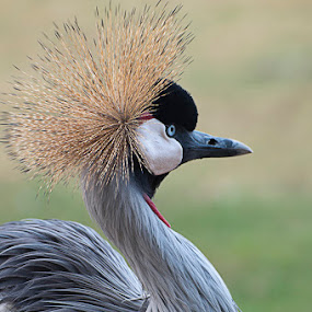 by Agus Prasetya - Animals Birds