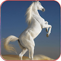 Horse Wallpapers 4K icon