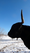 Photo: Bellina bisects a blue sky and snowy ground...