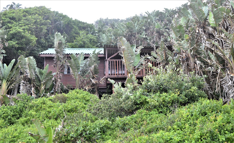 Situated on the edge of coastal forest, surrounded by Strelitzia nicolai, the Strandloper overnight hut at Double Mouth overlooks the beach