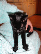 Photo: Lovely sharp little claws kneading my dressing gown!
