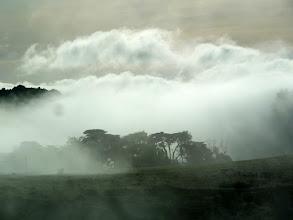 Photo: Fog, Estero Trail
