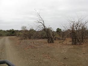Photo: Kruger National Park. Zerstörung durch Ellis.
