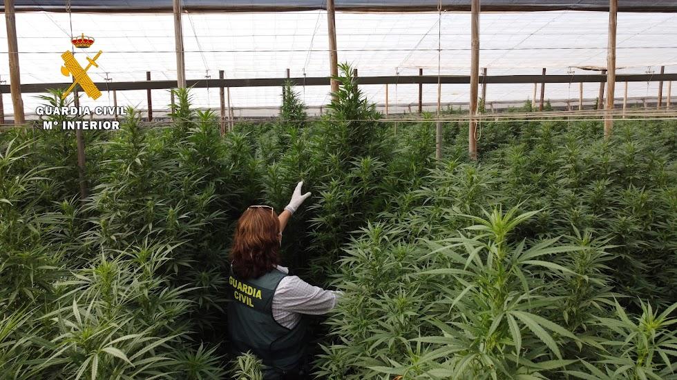 La Benemérita asesta un nuevo golpe al narcotráfico.