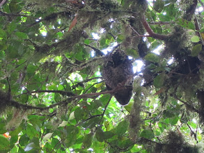 Photo: Termite nest
