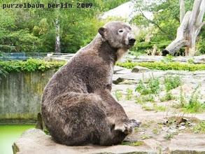 Photo: Knut setzt sich auf...
